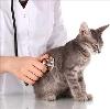 Ветеринарные клиники в Большом Улуе